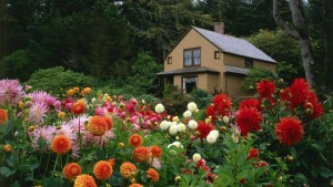 housewithdahlias