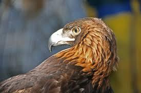 eaglewatch1